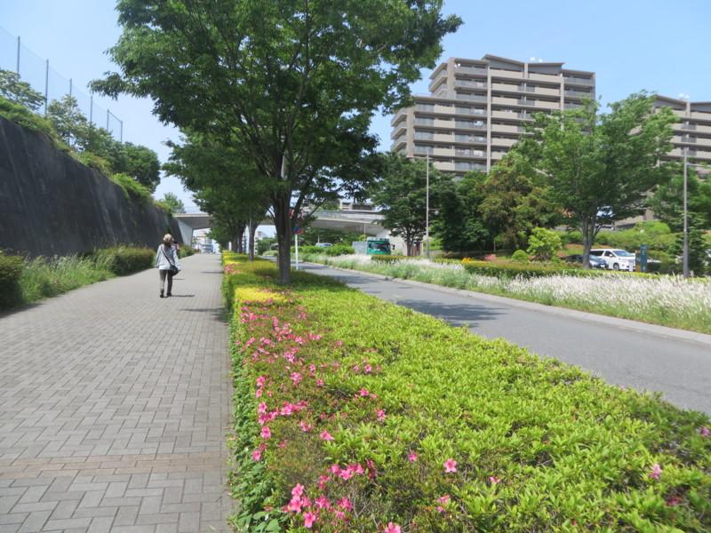 f:id:sasameyuki47:20140524132116j:image:w360