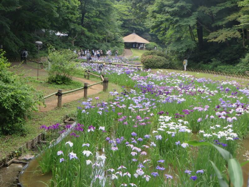f:id:sasameyuki47:20140616144400j:image:w640