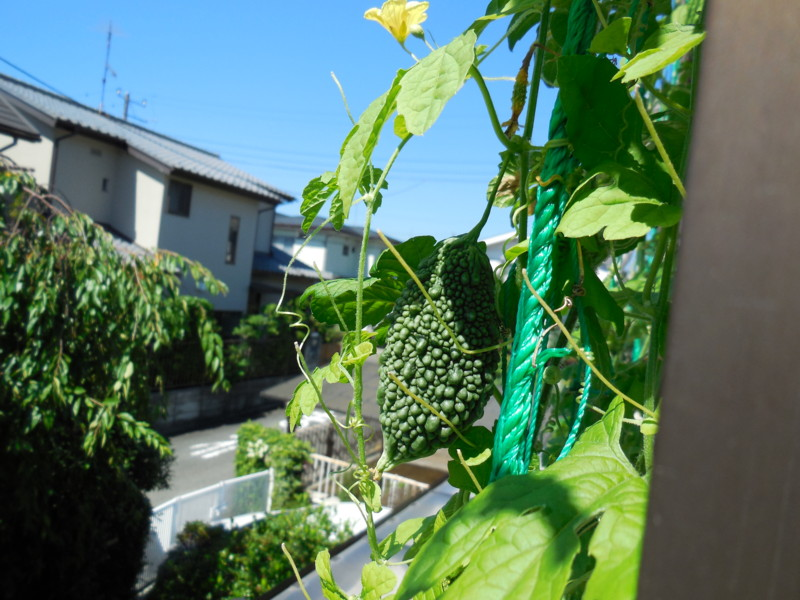 f:id:sasameyuki47:20140822095233j:image:w360