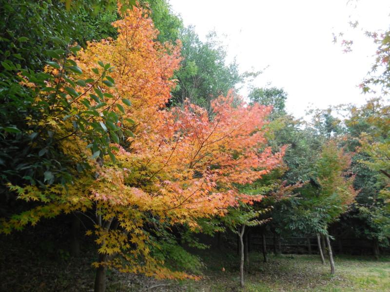 f:id:sasameyuki47:20141105114149j:image:w360