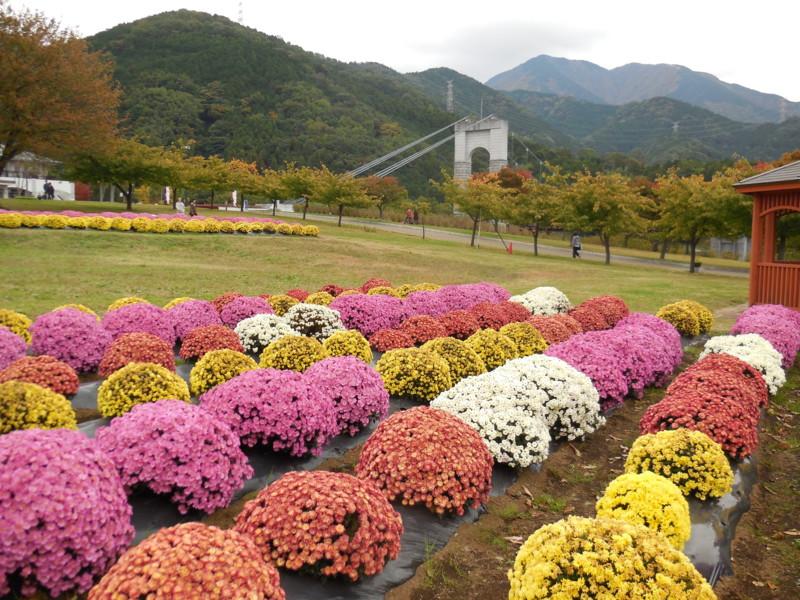 f:id:sasameyuki47:20141105140648j:image:w360