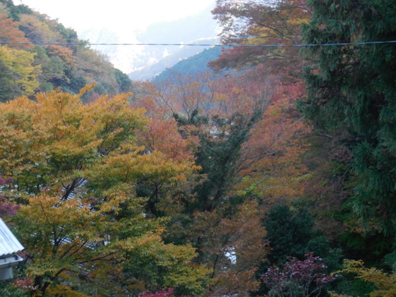 f:id:sasameyuki47:20141122151027j:image:w360