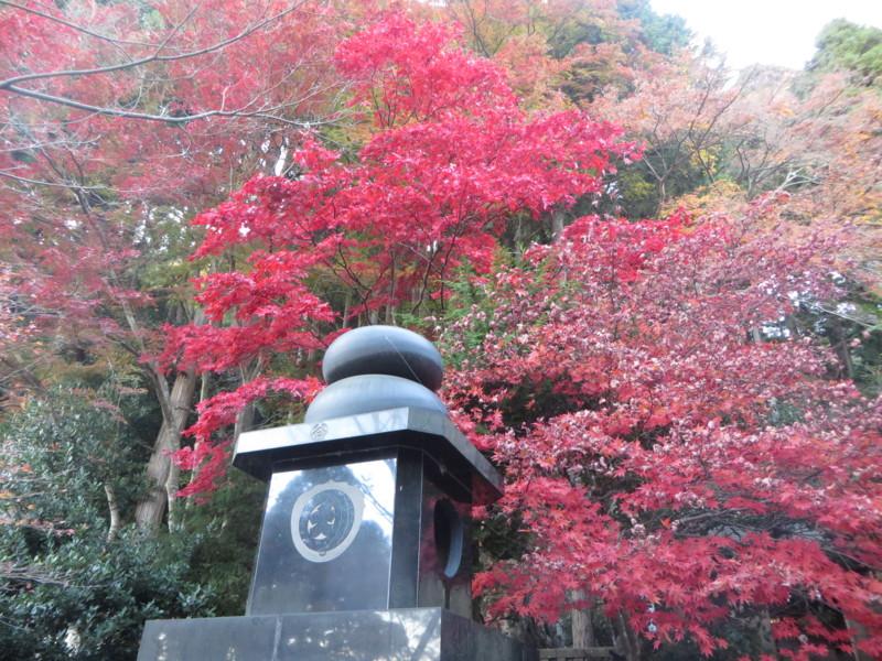 f:id:sasameyuki47:20141122154832j:image:w640