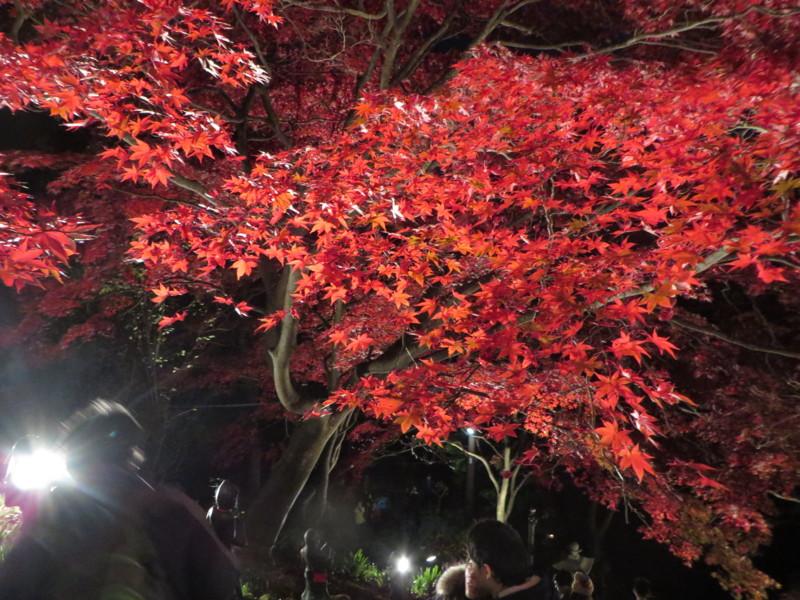 f:id:sasameyuki47:20141122171830j:image:w640