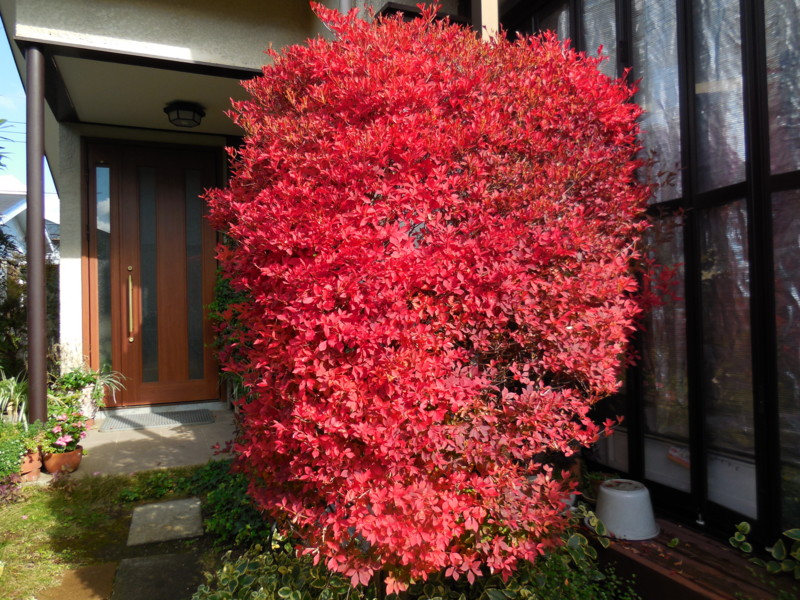 f:id:sasameyuki47:20141127114608j:image:w360