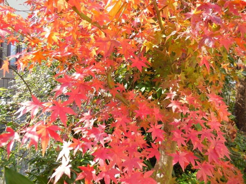 f:id:sasameyuki47:20141127114643j:image:w360