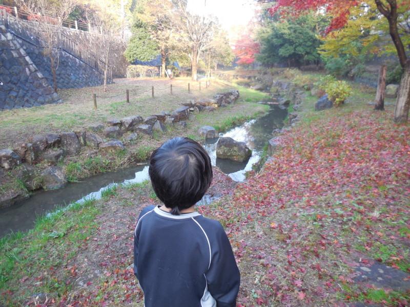 f:id:sasameyuki47:20141129152144j:image:w360