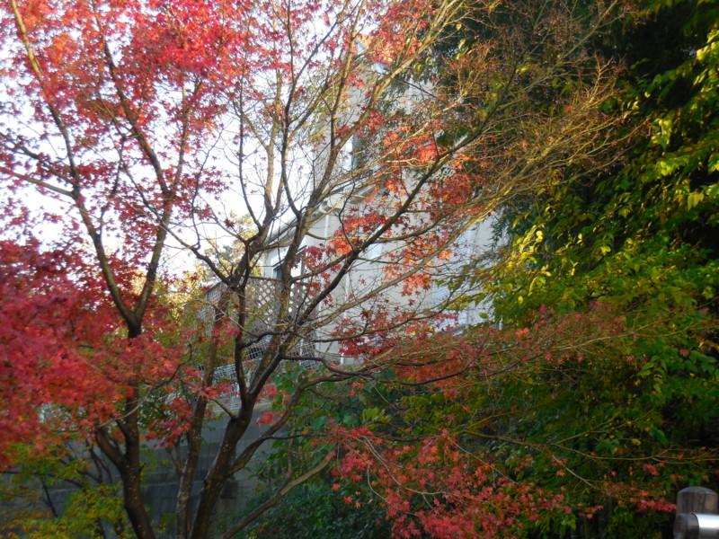 f:id:sasameyuki47:20141129152306j:image:w360