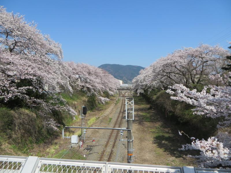 f:id:sasameyuki47:20150331141902j:image:w640