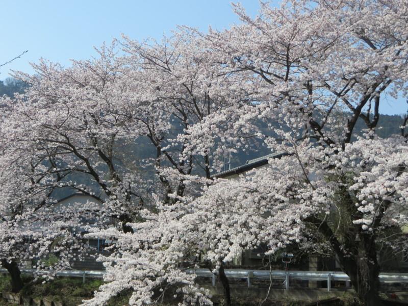 f:id:sasameyuki47:20150331142508j:image:w640