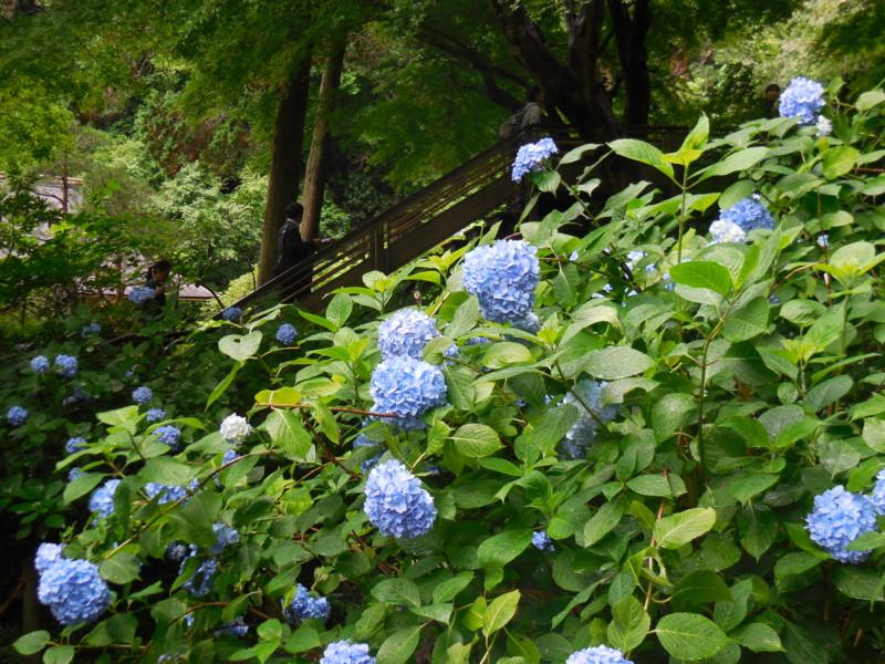 f:id:sasameyuki47:20150618154221j:image:w640