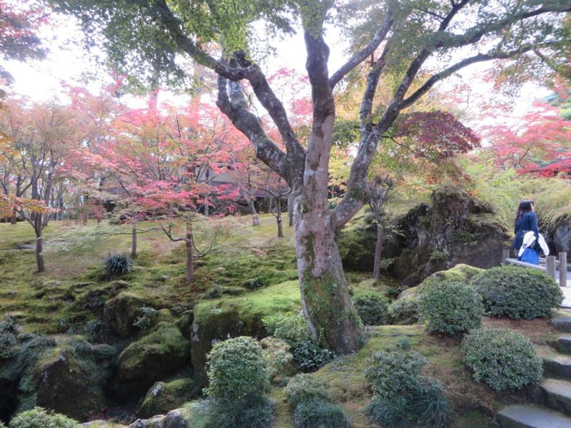 f:id:sasameyuki47:20151107120327j:image:w360