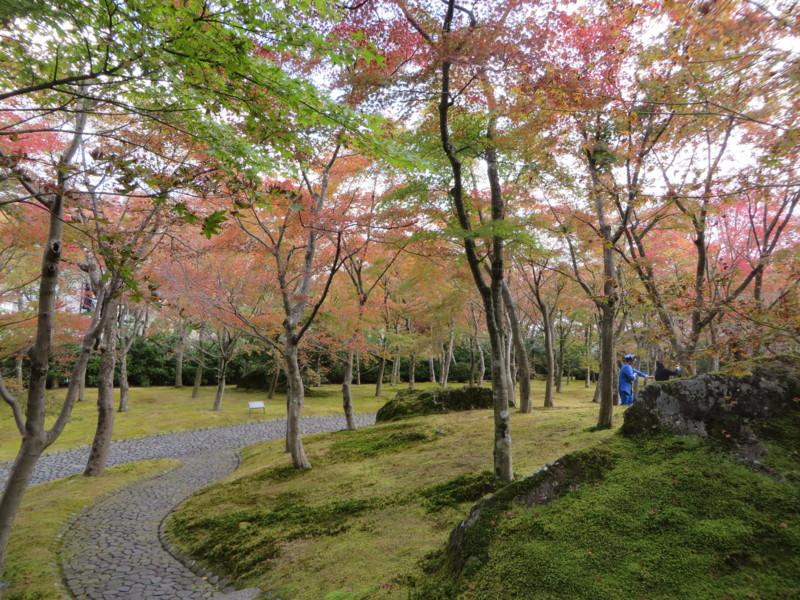 f:id:sasameyuki47:20151107120711j:image:w640