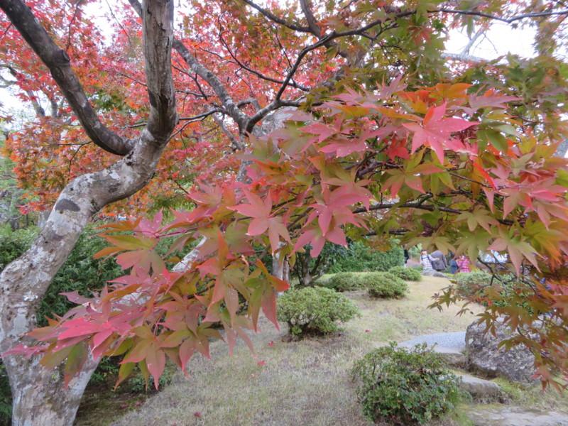 f:id:sasameyuki47:20151107122839j:image:w360