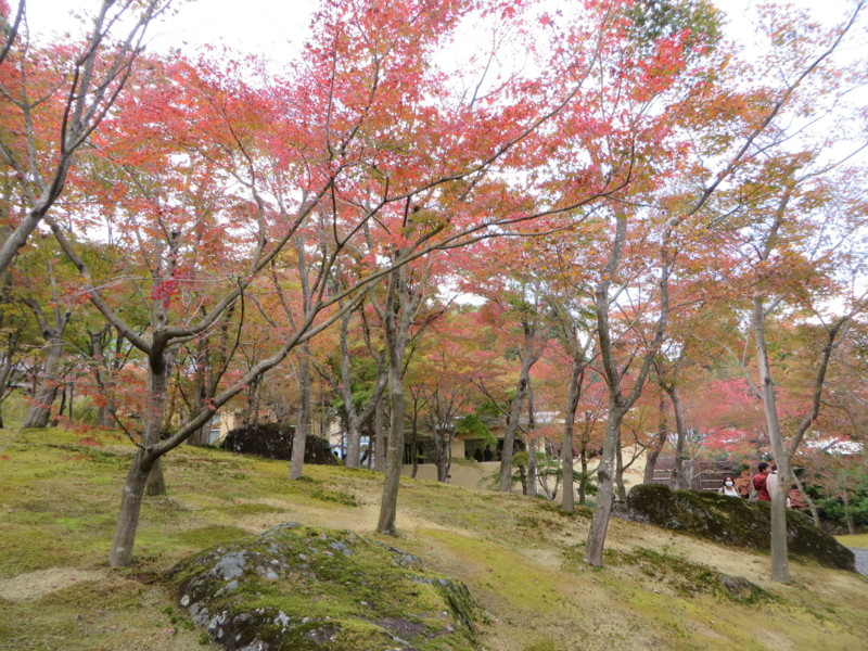 f:id:sasameyuki47:20151107131441j:image:w640