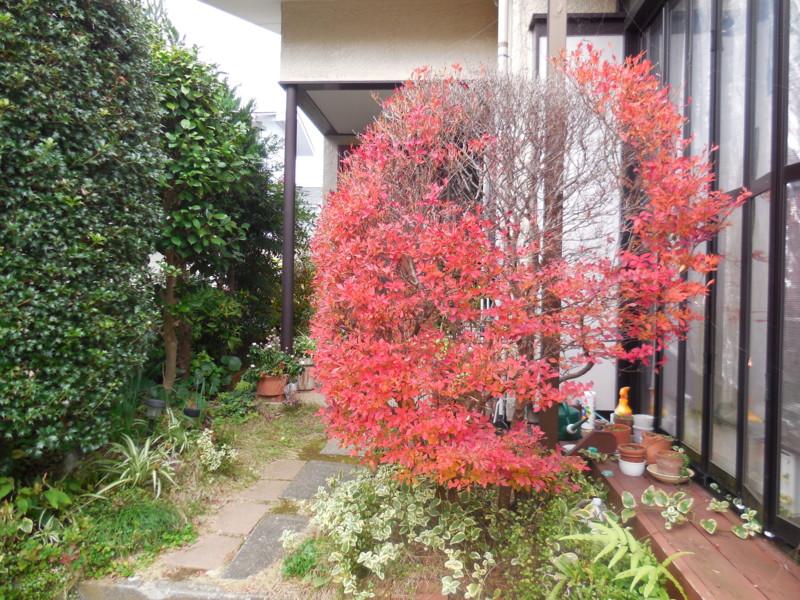 f:id:sasameyuki47:20151208120833j:image:w360