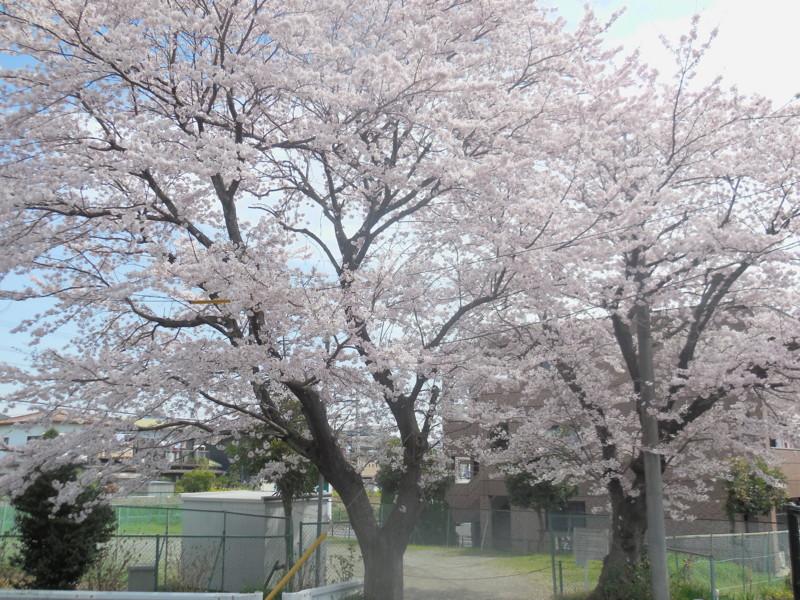 f:id:sasameyuki47:20160406105257j:image:w360