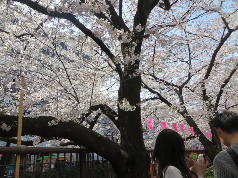 f:id:sasameyuki47:20170405134345j:image:w360