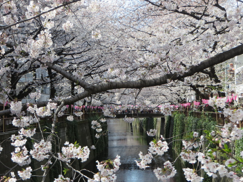 f:id:sasameyuki47:20170405135349j:image:w640