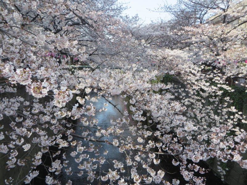 f:id:sasameyuki47:20170405140231j:image:w640