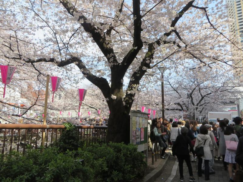 f:id:sasameyuki47:20170405140600j:image:w360