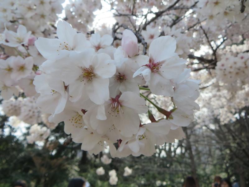 f:id:sasameyuki47:20170405145102j:image:w640