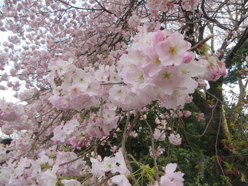 f:id:sasameyuki47:20170405145527j:image:w640