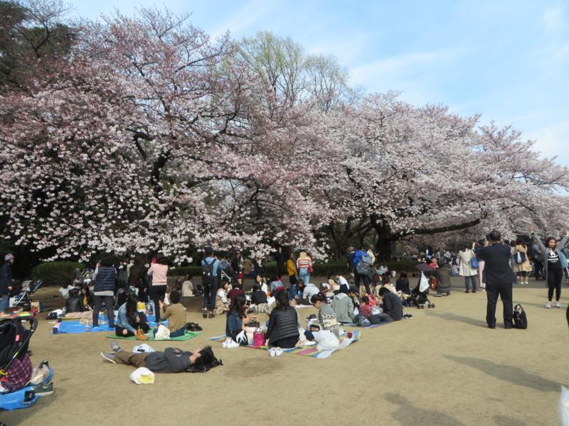 f:id:sasameyuki47:20170405145851j:image:w460