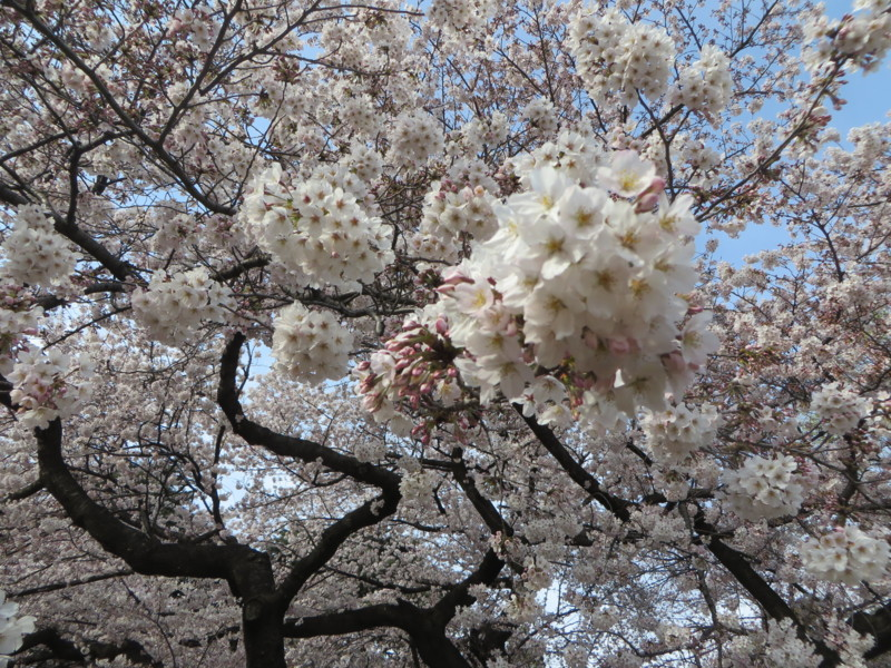 f:id:sasameyuki47:20170405150021j:image:w640