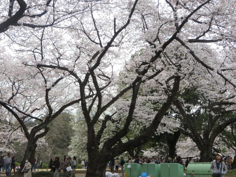 f:id:sasameyuki47:20170405154052j:image:w640