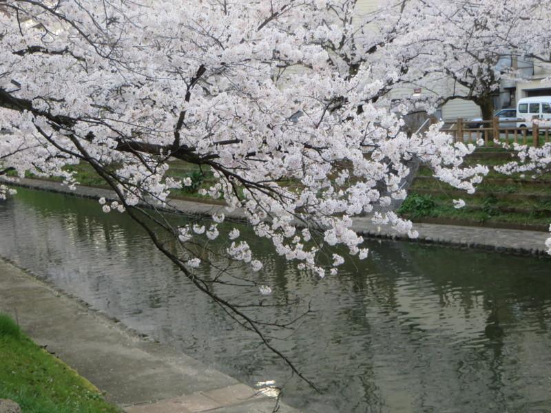 f:id:sasameyuki47:20170410173243j:image:w640