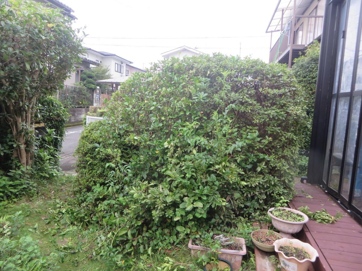 f:id:sasameyuki47:20200731124930j:plain