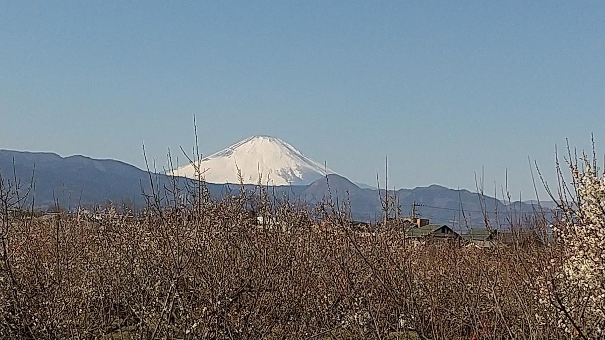 f:id:sasameyuki47:20210212184951j:plain
