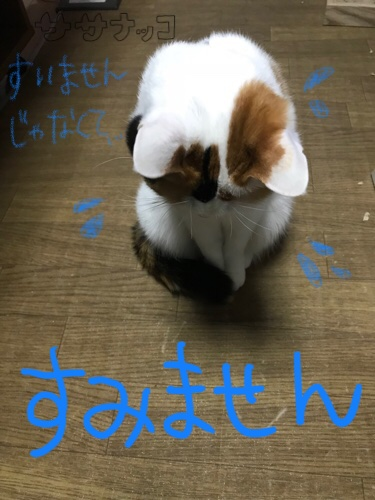 f:id:sasanakko:20180217152527j:image
