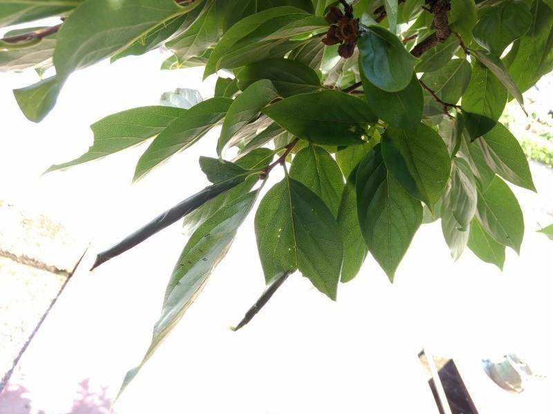 f:id:sasapurin:20170717114303j:plain