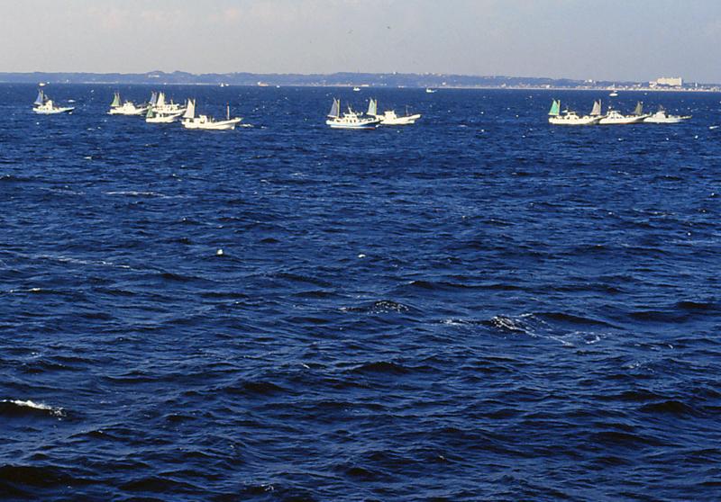 東京湾の釣舟