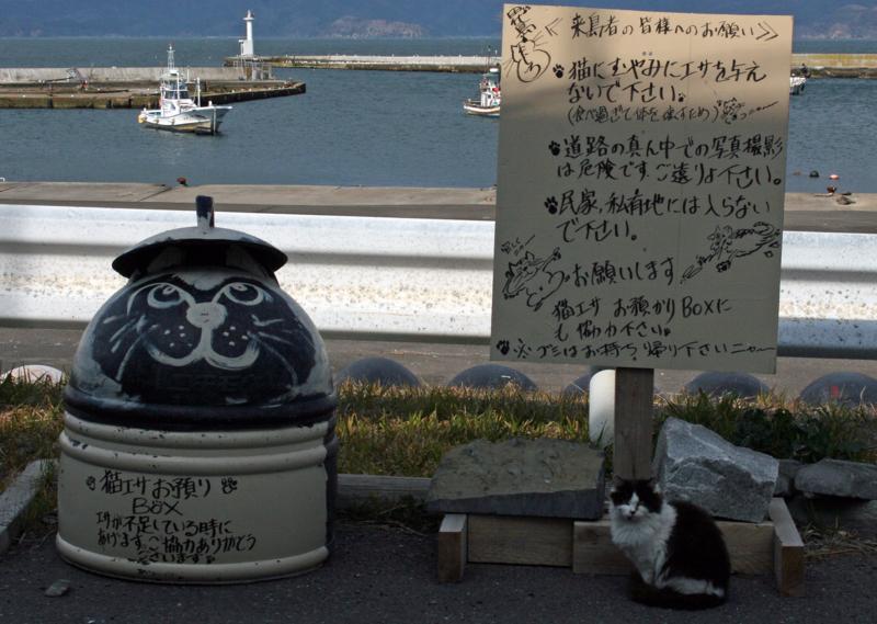 f:id:sashimi-fish1:20120508184138j:image:w345:left