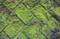 苔の造形03.06