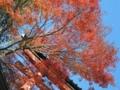 高尾山薬王院の紅葉-13.11-