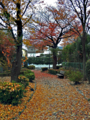 落葉の道(町田)
