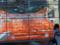 東京タワー・大展望台ルックダウンウィンドー-13.12-