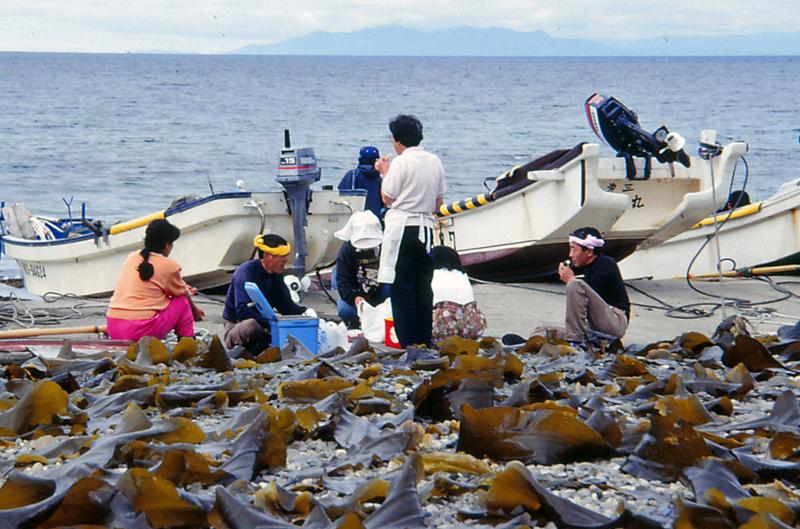 コンブ漁(函館市戸井町)-1-93.08