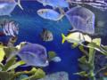 サンシャイン水族館(ルックダウン)-14.03-