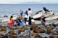 戸井町の真コンブ漁