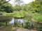 水生植物園(自然教育園)-14.04-