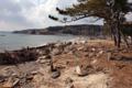 十八成浜(牡鹿半島)-1-14.05