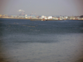 牡鹿半島佐須から石巻港-1-14.04