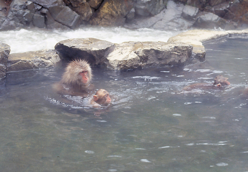 地獄谷野猿公苑-冬3-14.05