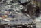 地獄谷野猿公苑-冬2-14.05