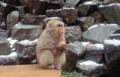 地獄谷野猿公苑-冬1-14.05